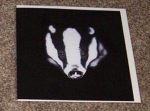 Steven Shaw - badger - card