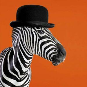 Clockwork zebra card - Sartorial Boutique and Gifts